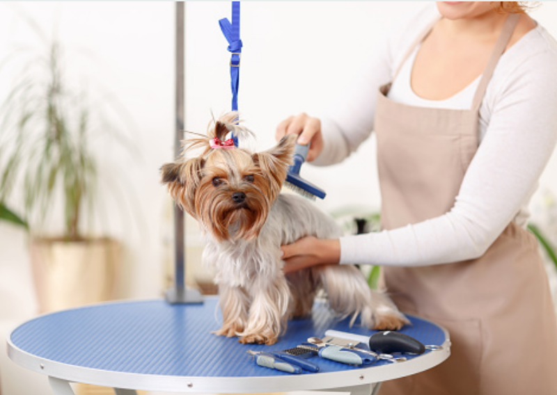 The Importance of Regular Grooming for Both Dogs and Cats