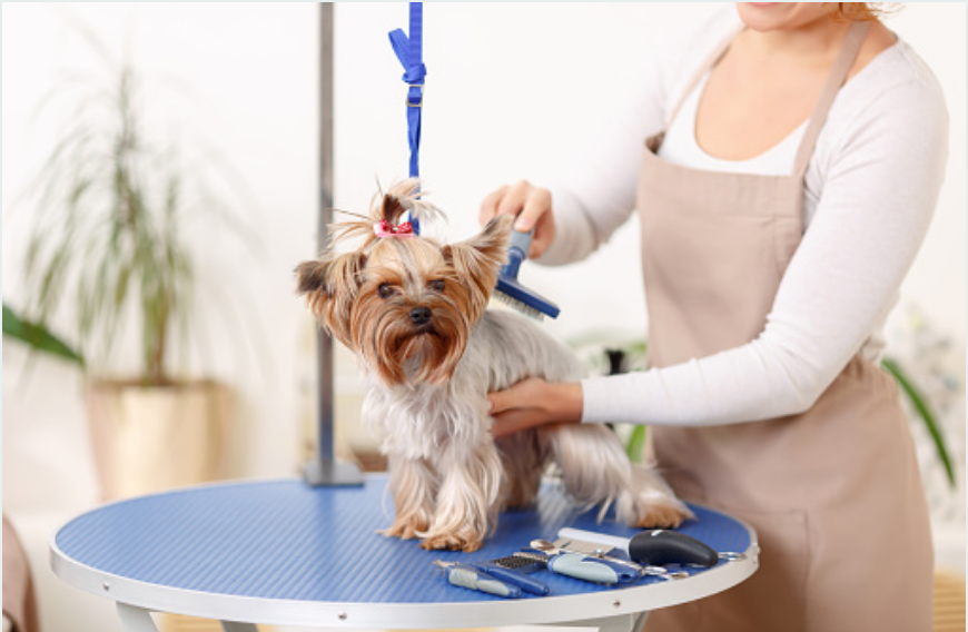 Dog grooming billings mt groomingdales dog grooming isnt a canine luxury although it might feel like it to the dog but very much a necessity its a necessity not only to keep your dog solutioingenieria Images