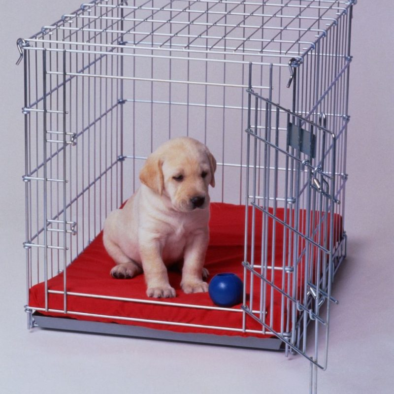 Crate Train a Puppy