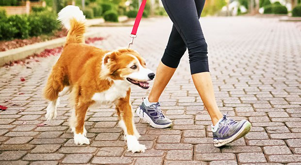 Time Spent Around Dogs Can Benefit Our Health: Here's Why…