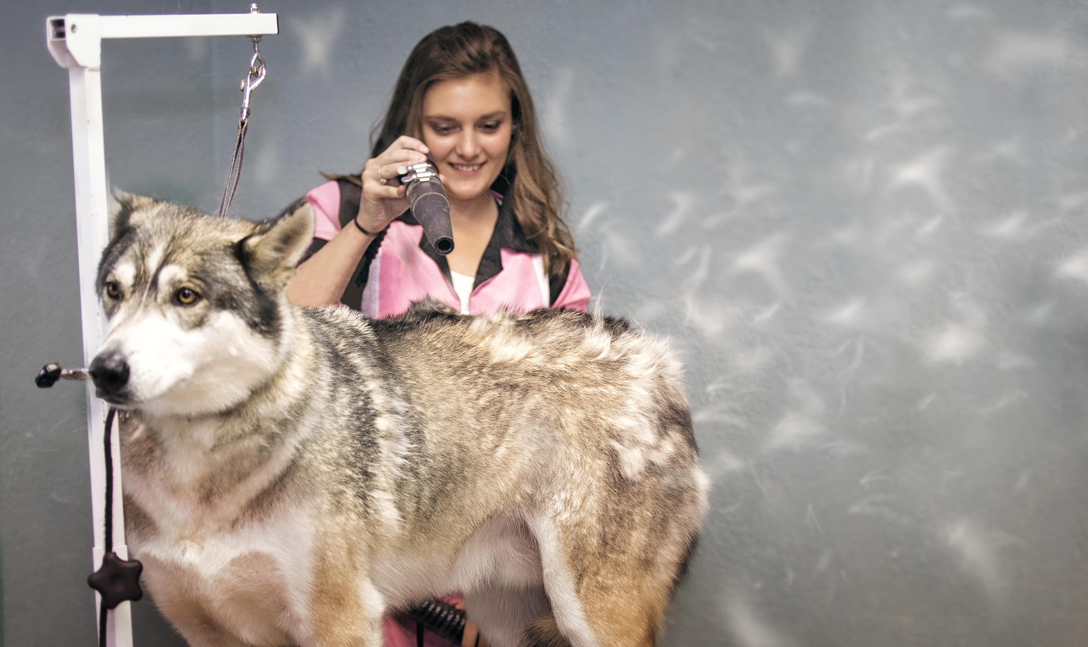 dog grooming billings mt