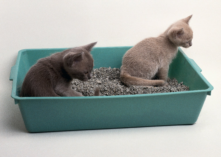 Litter Box Training for Kittens