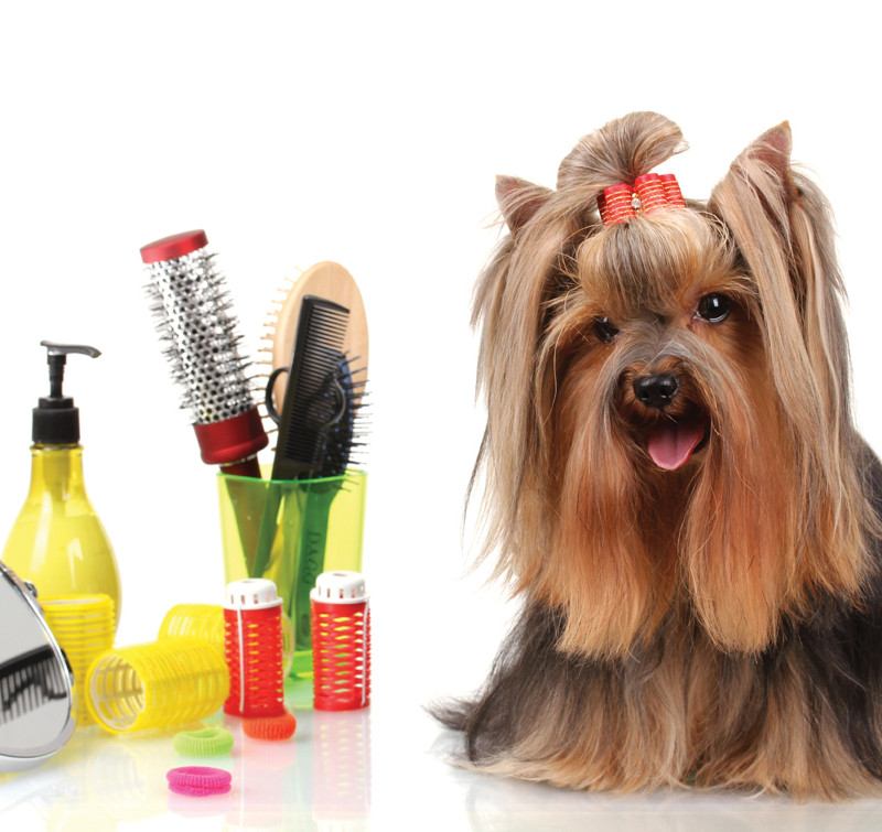 Canine Grooming Tips